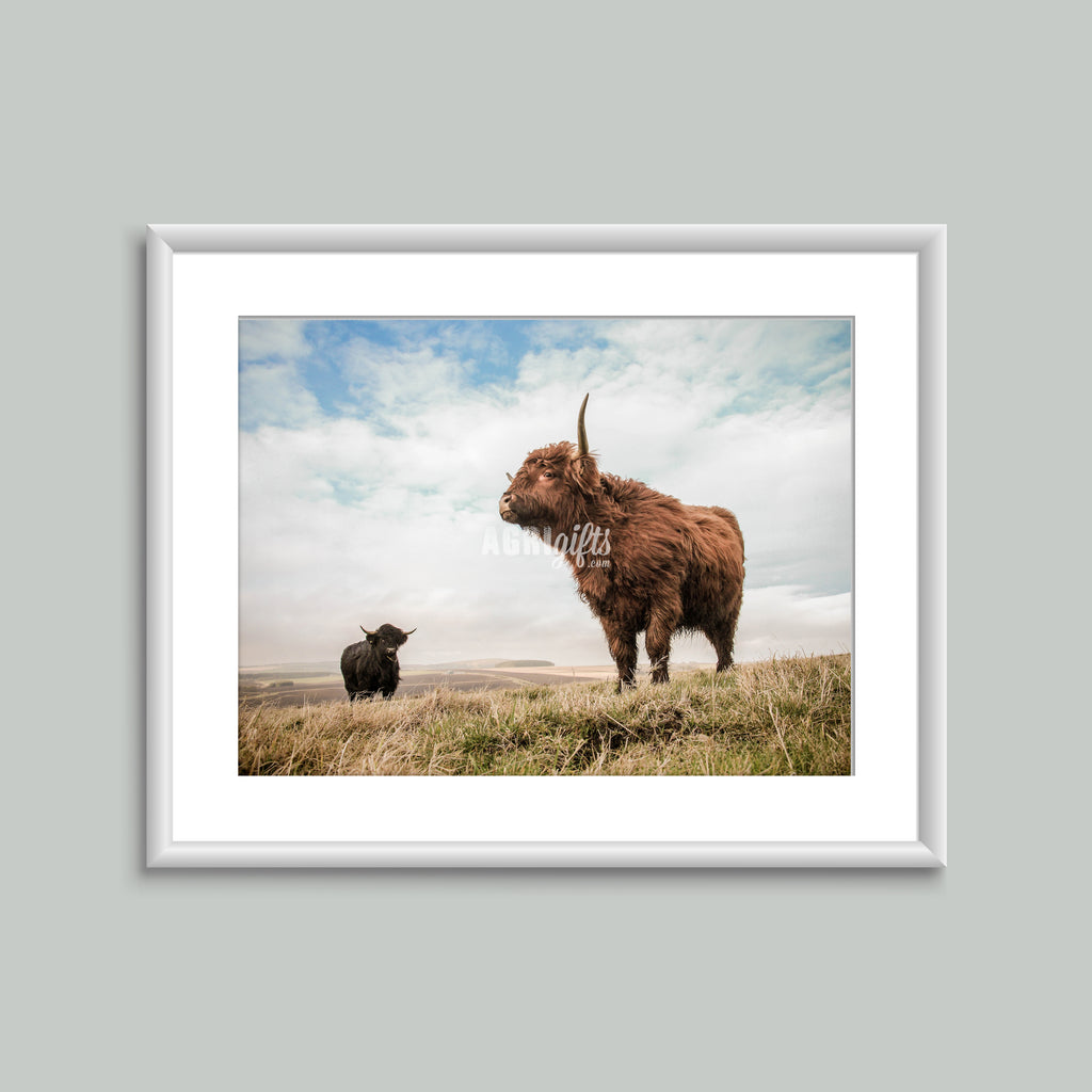 8x6 Mounted Print - Highland Cattle 'Pride'