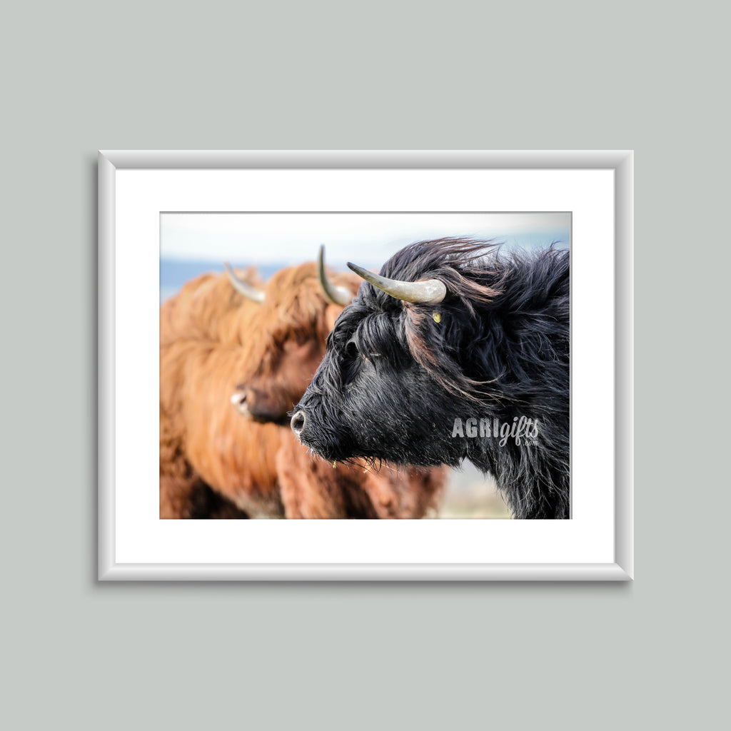 8x6 Mounted Print - Highland Cattle 'Stand Guard'