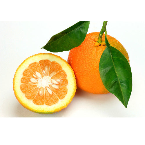 Sour Orange Fruit