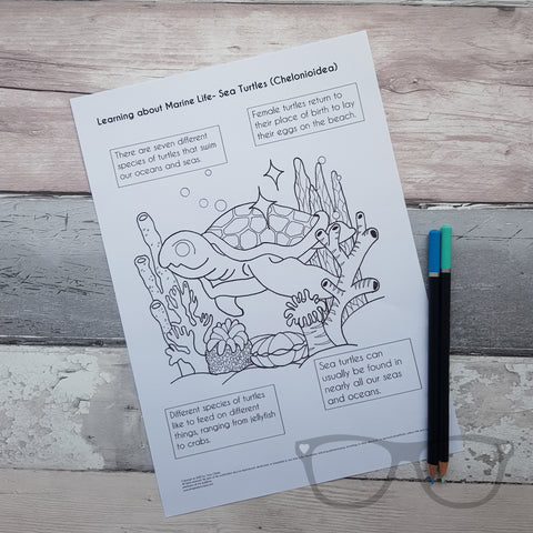 Turtle colouring Page by Mini Geek Boutique