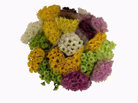 Daisy Novelty Pompoms