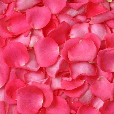 Hot Pink Fuchsia Rose Petals