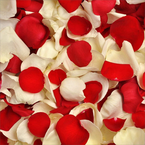 Red and White Rose Petals