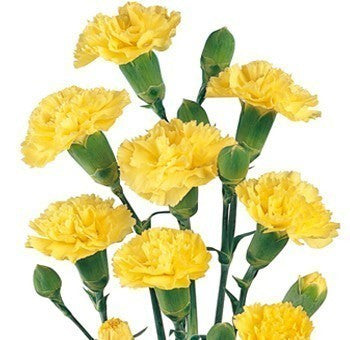 Yellow Mini Carnation flower