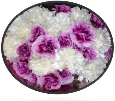 Mini Carnations Bouquets