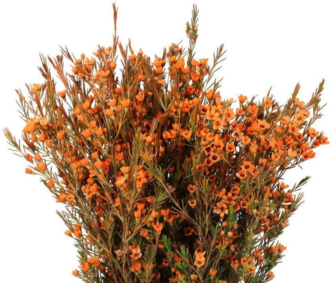 Orange Tnted Wax Flowers