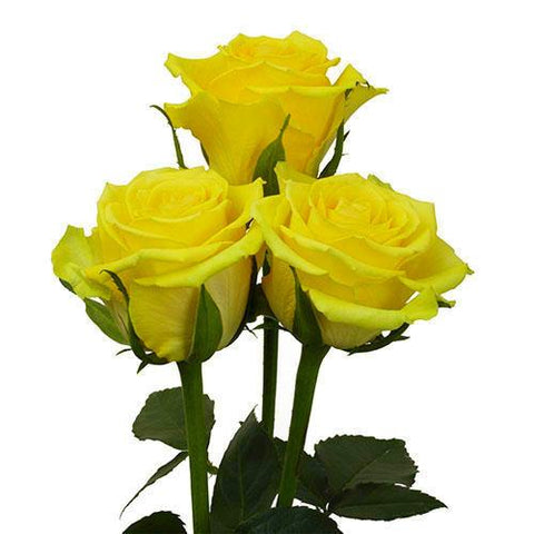 yellow roses wholesale flowers