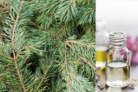 Balsam Fir (Essential Oil)