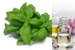 Basil Sweet (Essential Oil)