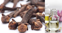 Clove Bud (Essential Oil)