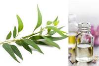 Eucalyptus Lemon (Essential Oil)