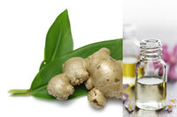 Ginger Root (Essential Oil)