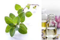 Oregano (Essential Oil)