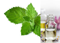 Spearmint (Essential Oil)