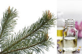Pine Scotch (Essential Oil)