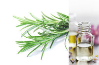 Rosemary (Essential Oil)