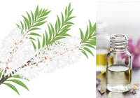 Tea Tree (Essential Oil)