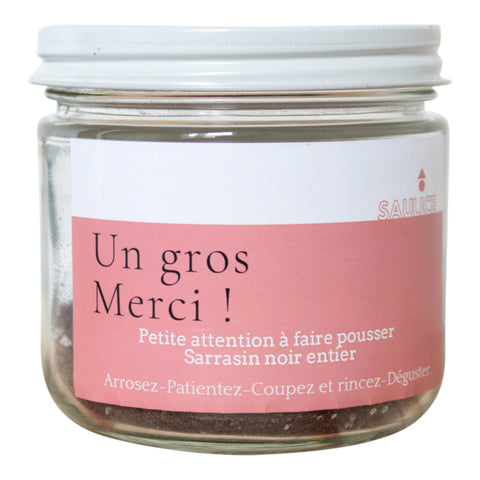 Jar with Buckweat Seeds to Grow - Un grand merci
