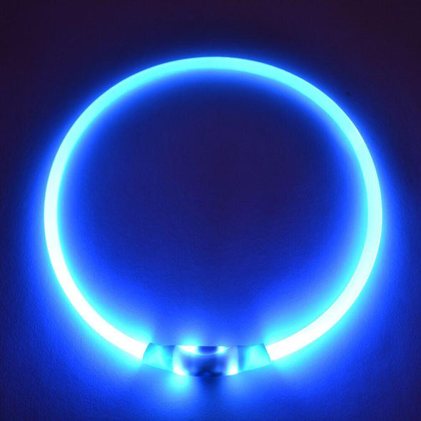 light up Led dog collar blue