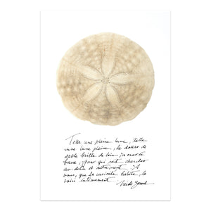 dollar de sable, affiche dollar de sable sur fond blanc, sand dollar on white background poster, photographie dollar de sable, sand dollar photography, art maritime, martime art, sand dollar, dollar de sable, affiche dollar de sable et calligraphie, sand dollar and calligraphy poster, À Marée Basse