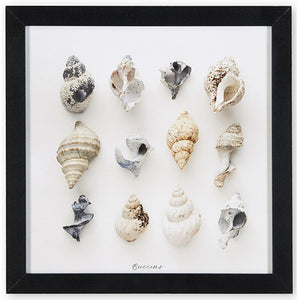 buccins, collection de buccins, photographie buccins, whelks, whelks photography, whelks collection, coastal art, art maritime, À Marée Basse, whelks photography