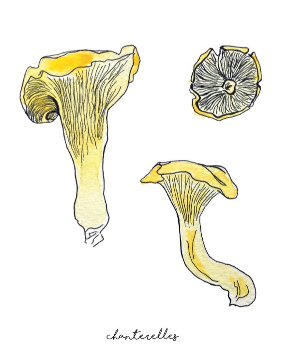 affiche chanterelles, illustration chanterelles, illustration champignons, affiche champignons, mushroom poster, chanterelle poster, chanterelle illustration, mushroom illustration, À Marée Basse