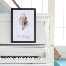 Load image into Gallery viewer, coquillage neptune, affiche coquillage et calligraphie, affiche coquillage, photographie coquillage, sea shell photography, coastal art, art maritime, À Marée Basse