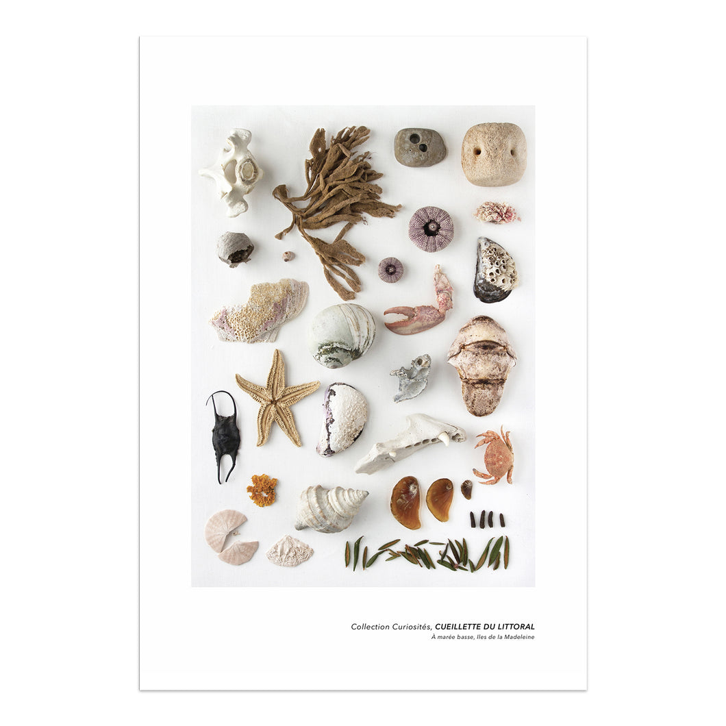 affiche planche naturaliste, affiche cueillette du littoral, coquillages sur fond blanc, sea shell poster on white background, art maritime, maritime art, À Marée Basse