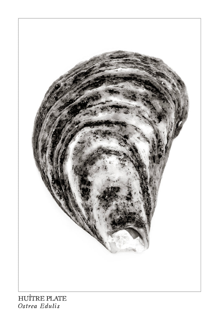 huitre, oyster, affiche huitre en noir et blanc, photographie huitre, clam photography, black and white clam photography, coastal art, art maritime, À Marée Basse