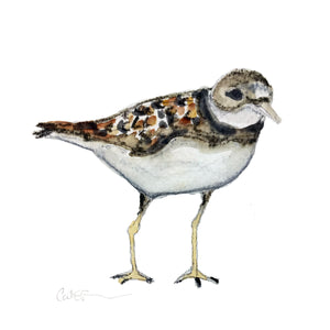 pluvier siffleur, affiche pluvier siffleur, illustration pluvier siffleur, piping plover, illustration oiseau, piping plover illustration, bird illustration, À Marée Basse