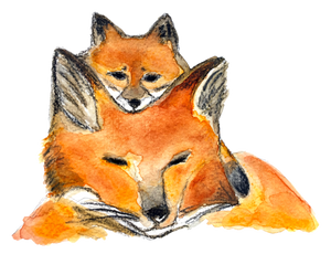 renards, illustration renards, maman renard et renardeau, affiche deux renards, fox illustration, mother and baby fox, À Marée Basse