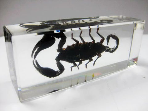 Black Scorpion - Resin