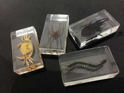 Preserved Insects - Crab . Spider . Beetle . Centipede - 4 Pieces