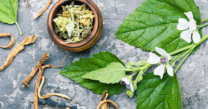 Botanical Oracle: Marshmallow, Althaea officinalis