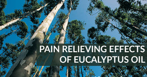 New Study: Pain Relieving Effects of Eucalyptus Oil