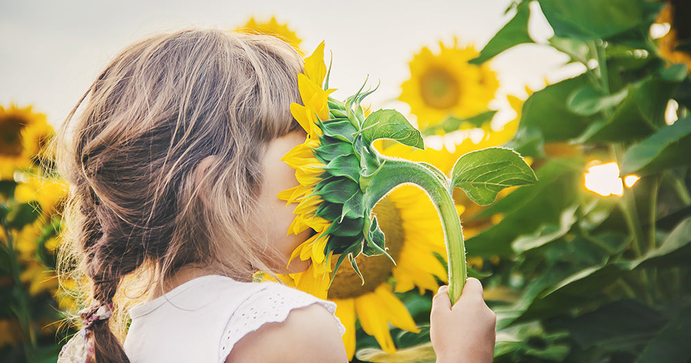 little girl with head in sunflower smelling flower