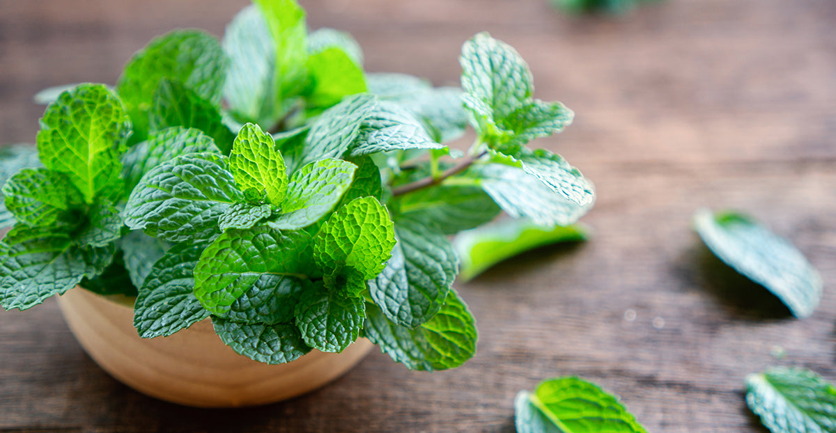 spearmint gathered in a bowl on a table