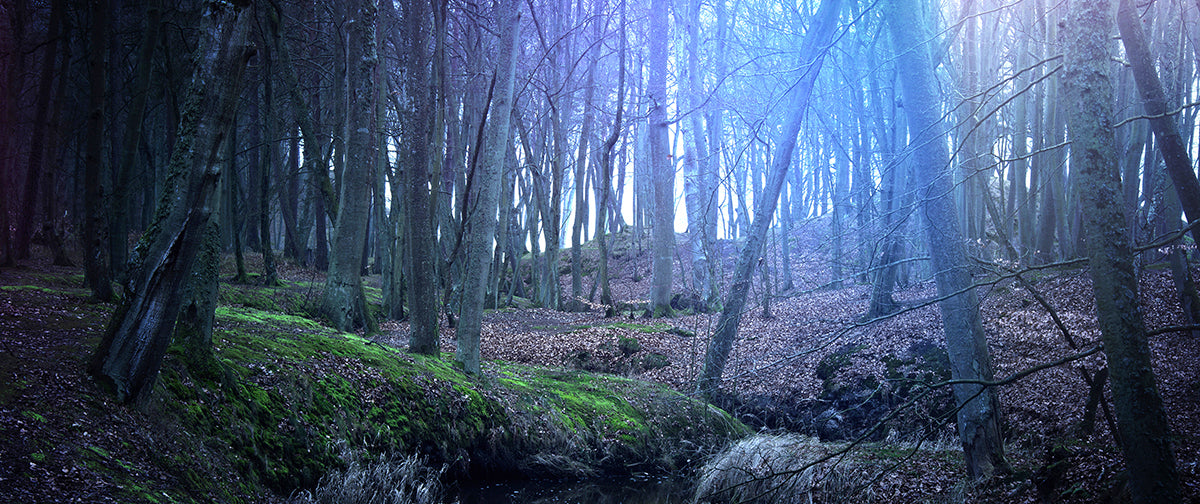 Magical and mysterious dark forest