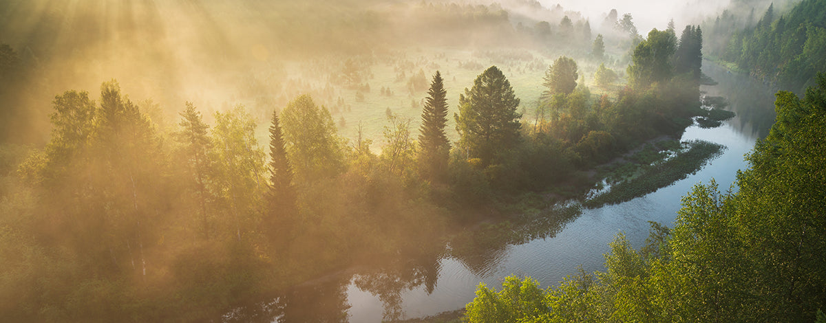 Mystical forest with river and fog