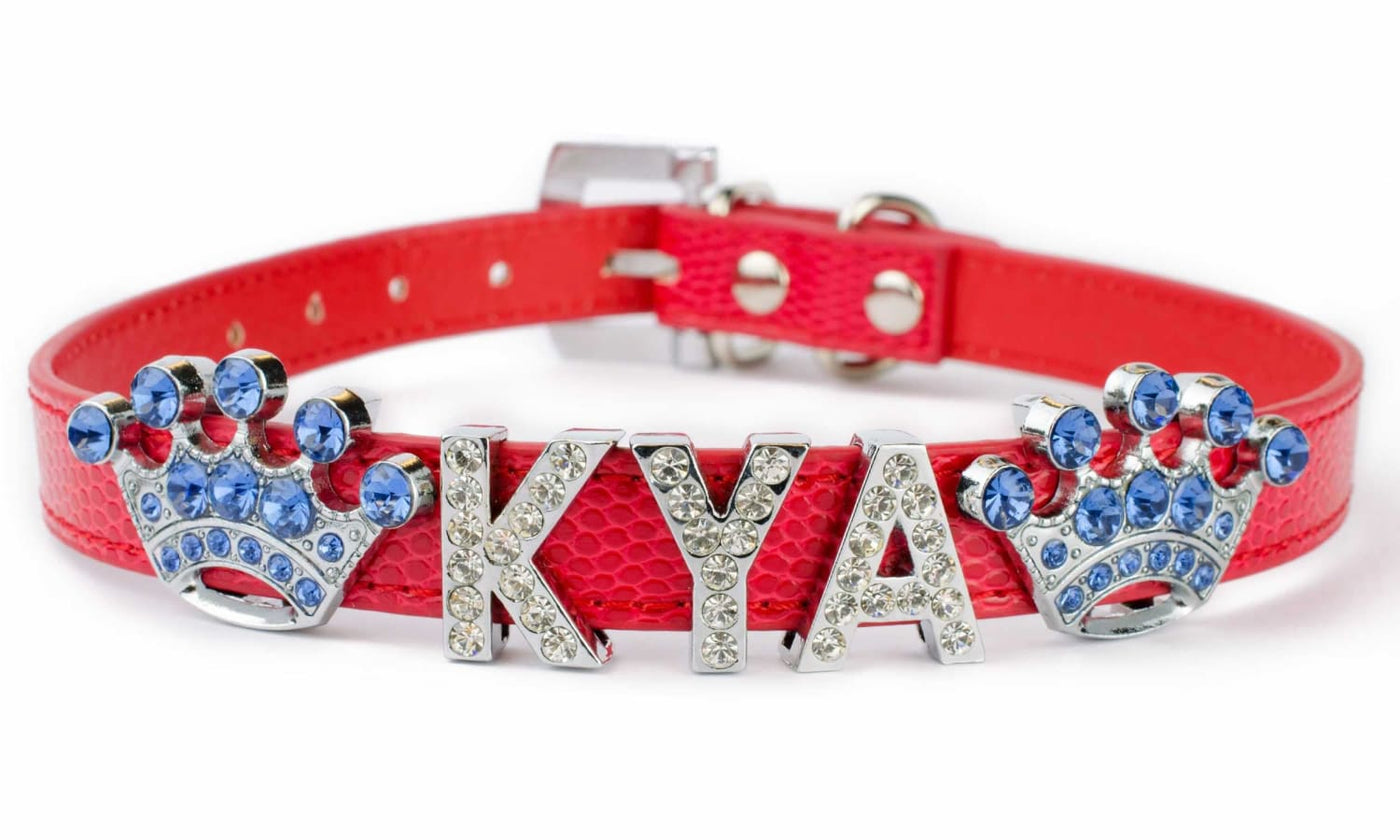 4 Creative Words to Spell Out When Buying Customized Dog Collars for Your Pet