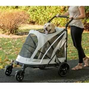 How One Dog Stroller Jogger Helped a Dog Named Turbo