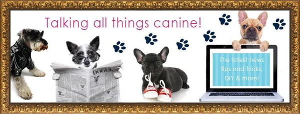 New Word Press Blog to Launch  for The Doggie Diva Dog Boutique