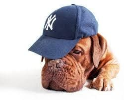 NY Yankees and Giants Sports Doggie Apparel