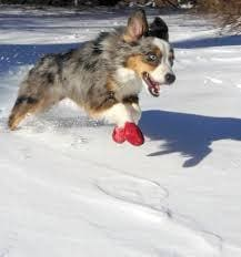 Pawz Dog Shoes_Keep Fido's Paws Off the Icy Streets