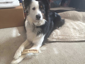Why Elk Antler Treats Are Popular Among Doggies