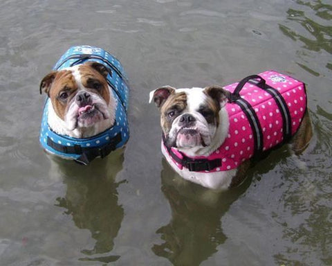 Dog Life Jackets, Swimming & Boating
