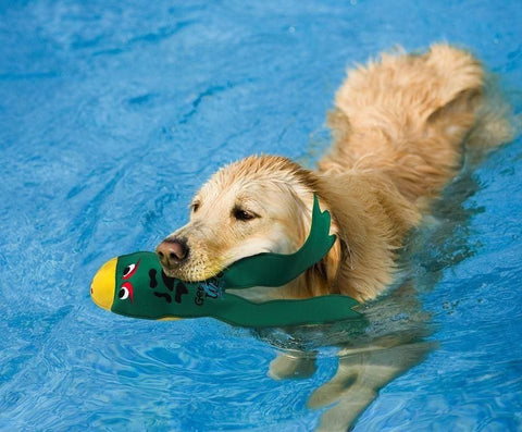 Dog Pool Toys for Swimming