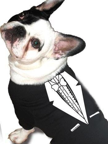Formal Dog Wedding Clothing & Accessories