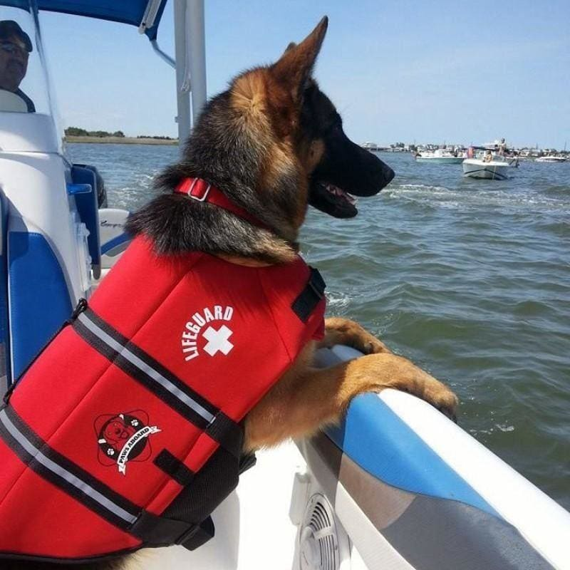 Outdoors for Dogs: Doggy Biking, Backpacks & Boating