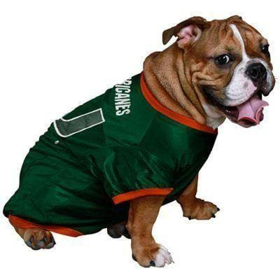 Sports Products for Dogs: NFL, NCAA & MLB